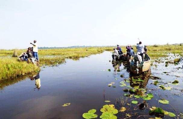 Mabamba swamp Uganda -1 day Mabamba bird watching tour