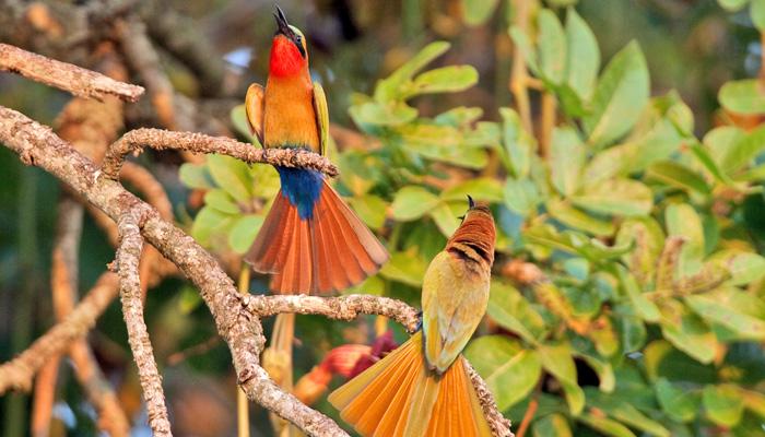 3 days birding tour Uganda 3 Days Birding Safari Uganda