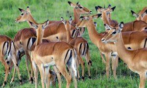 wildlife at 3 days fishing safari in Lake Mburo
