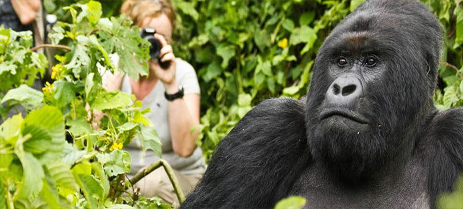 Mountain Gorilla - 5 days Uganda Gorilla and Cultural tour