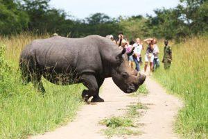 Rhino trekking at Ziwa - 5 Days Uganda Safari (Mabamba, Jinja and Murchison Falls)
