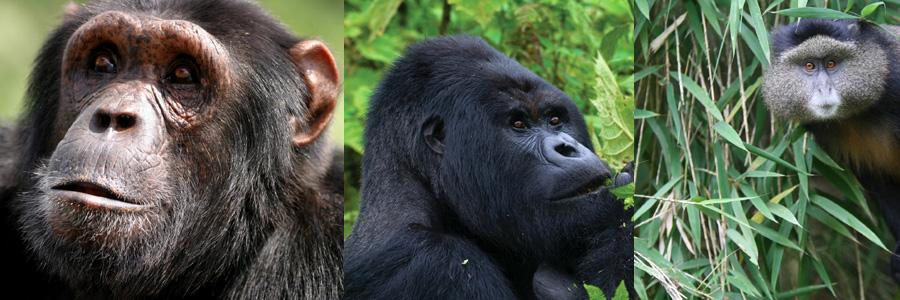 5 days Uganda Primates and wildlife Safari