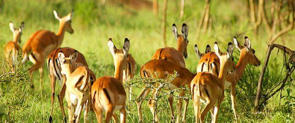 2 Days Lake Mburo wildlife Safari Tour