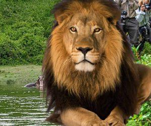9 Days Uganda Wildlife and Primates Safari