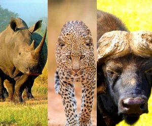 The Big 5 safari 6 Days Uganda Chimpanzees and Big Five Tour