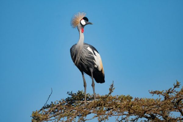 Bird watching on 1 Day Entebbe Tour