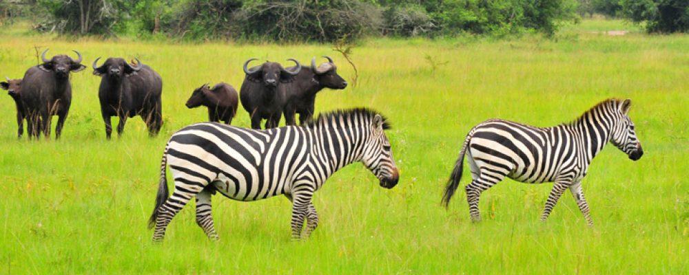 2 Days Lake Mburo Tour wildlife